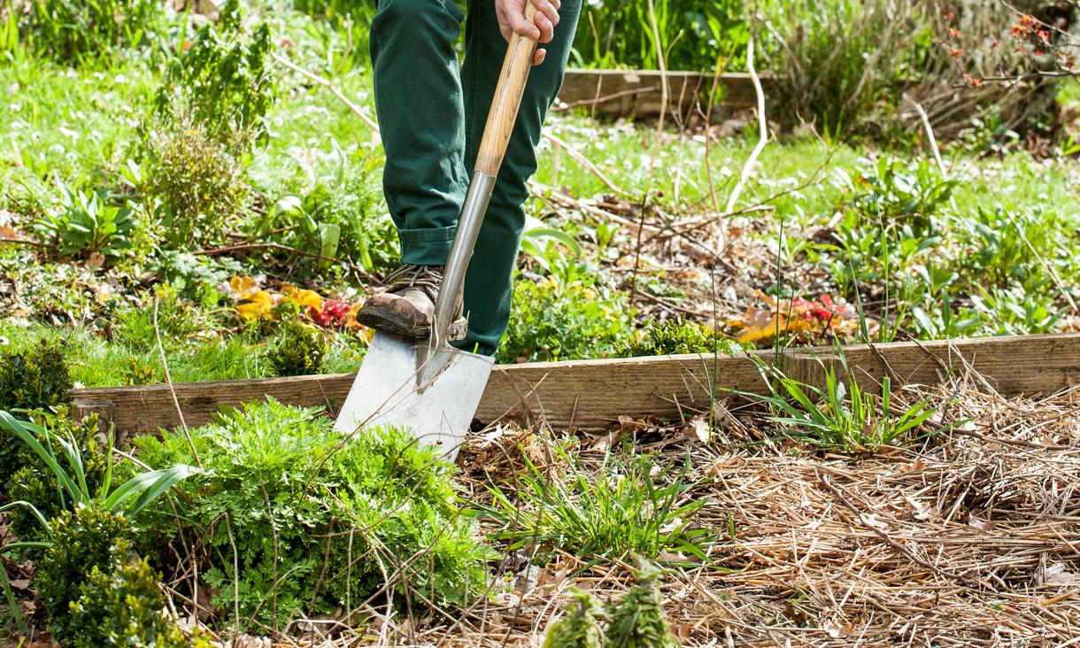 cultiver son jardin de façon écologique image