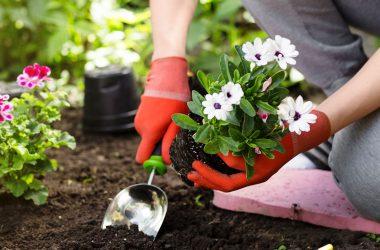 le jardinage sur la santé physique